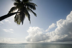 Palm tree over the caribbean sea Royalty Free Stock Image
