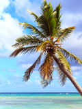 Palm tree over caribbean sea Stock Photography