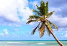 Palm tree over caribbean sea Stock Photo