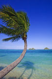 Palm tree over the ocean Royalty Free Stock Photos