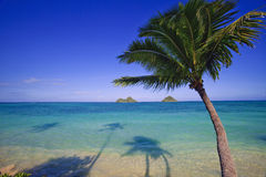 Palm tree over the ocean Royalty Free Stock Images