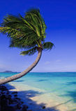 Palm tree over the ocean Royalty Free Stock Image