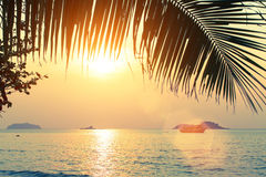Palm tree over the ocean at amazing sunset. Nature. Royalty Free Stock Photos