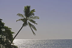 Palm tree over the Pacific Ocean Stock Images