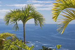 Palm tree over Pacific Ocean Royalty Free Stock Photos