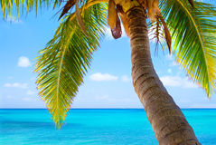 Palm tree over perfect blue sunny tropical beach Stock Photo