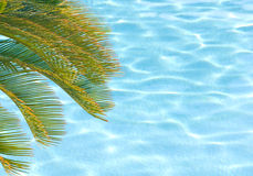 Palm tree over pool Stock Photography