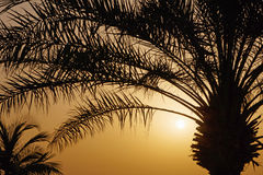 Palm tree over rising sun Royalty Free Stock Image