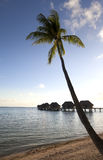 Palm tree over the sea and houses on piles over water Stock Photography