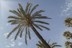 Palm tree over sky Stock Photography