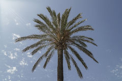 Palm tree over sky Stock Images
