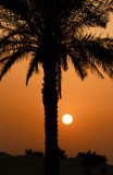 Palm tree over sunset Royalty Free Stock Image