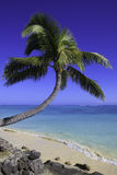 Palm tree over the water Stock Photography