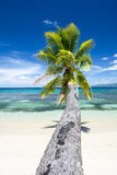 Palm tree over water Stock Photo