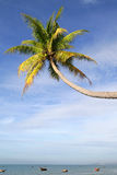 Palm tree over water Royalty Free Stock Photos