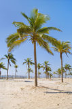 palm tree over white sand beach. royalty free stock photos