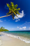 Palm Tree over White Sand Beach Stock Images