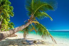 Palm tree overhanding the inviting lagoon on Fiji Island Royalty Free Stock Photography