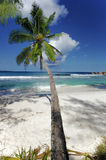 Palm tree overhang beach Royalty Free Stock Photo