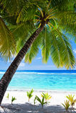 Palm tree overlooking blue lagoon Royalty Free Stock Image