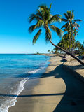 Fiji beach. Palm tree overlooks a beach in Fiji royalty free stock photography