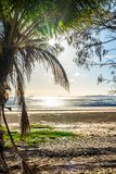 A palm tree paradise overlooks the beach with lens flares. A morning shot of a beach from behind palm trees. Coconuts can be seen on the ground where they have Royalty Free Stock Images