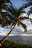 Palm tree by Pacific ocean. Royalty Free Stock Image