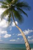 Palm tree and Pacific Ocean. A palm tree over pacific blue ocean on a costa rica beach in Corcovado Park stock photo