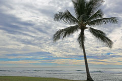 Palm tree on Pacific Ocean Stock Images