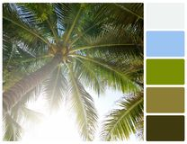 Palm tree with palette color swatches Royalty Free Stock Images