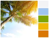 Palm tree with palette color swatches Royalty Free Stock Photography