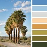 Palm tree palette Stock Photos