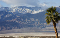 Palm Tree and Panamint Mountains Royalty Free Stock Photo
