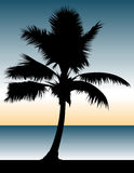 Palm Tree Paradise. Vector illo of a palm tree in front of a serene background Stock Photo