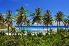 Palm Tree Paradise. Ocean View, Blue skies Stock Image