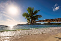Palm tree at paradise beach of Seychelles at sunset Royalty Free Stock Photo