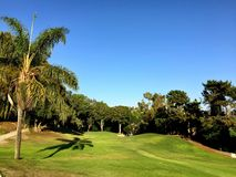 Palm tree paradise. Palm lined golf course Stock Image