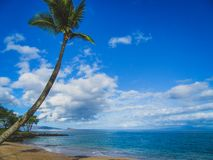 Palm Tree in Paradise. Single palm tree set against a calm and relaxing ocean on a sunny day at Maluaka Beach, Maui, Hawaii Stock Image
