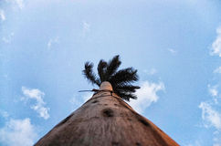 Palm tree in paradise. Taken from the ground Stock Photography