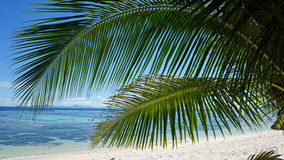 Palm tree in paradise. Palm tree on tropical beach on the seychelles Royalty Free Stock Photos