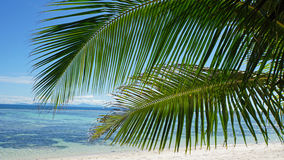 Palm tree in paradise. Palm tree on tropical beach on the seychelles Stock Photography