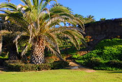 Palm Tree in Park Stock Photo