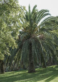 Palm tree at park in summer Stock Photos