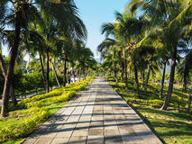 PALM TREE PATHWAY Royalty Free Stock Photography