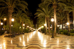 Palm tree pathway at night Stock Image