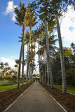 Palm tree pathway Royalty Free Stock Images
