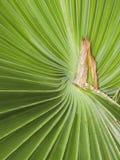 Palm tree pattern  at El Dorado East Regional Park. Stock Photography