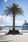 Palm tree on peer Royalty Free Stock Image