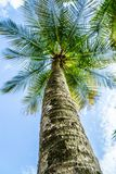 Palm tree perspective from below stock image