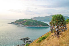 Palm tree, Phromthep cape viewpoint , Phuket ,Thai Stock Images
